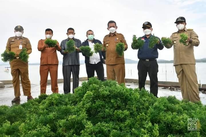 Gubernur Kepri, Ansar Ahmad Tampak Puas Atas Hasil Budidaya Rumput Laut Yang Menjadi Komoditi Andalan Di Kepri