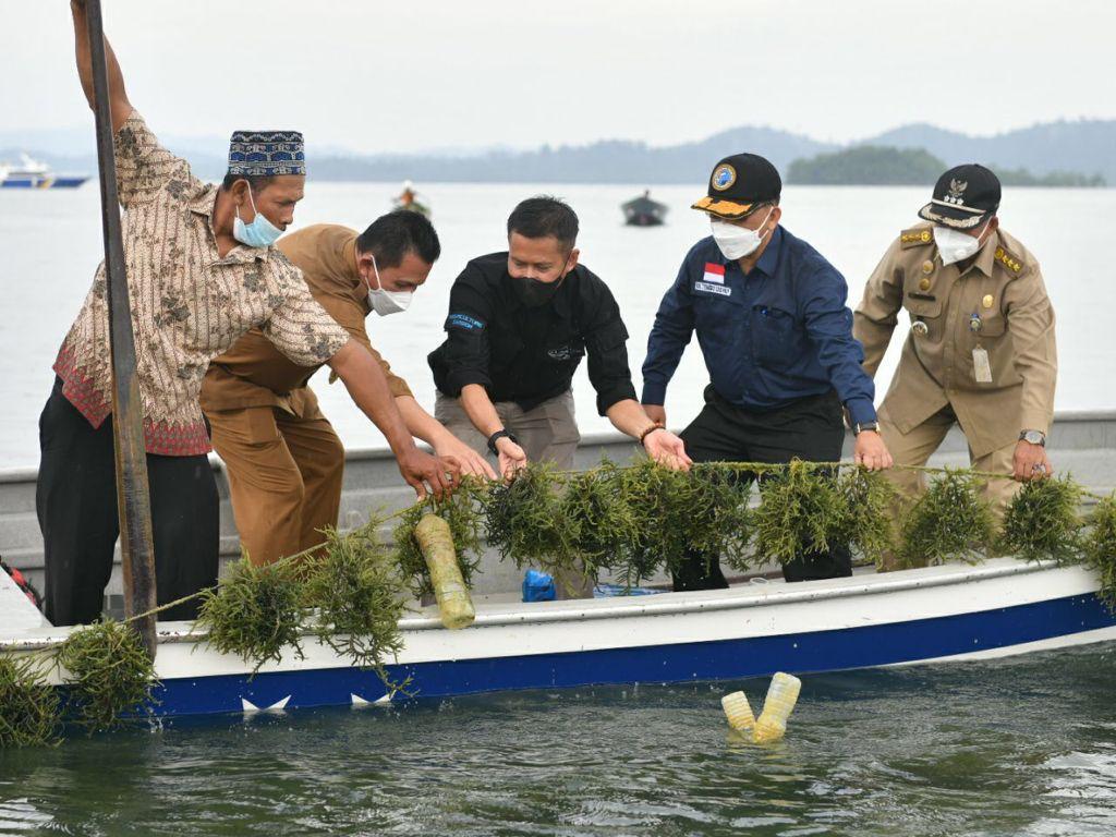 Gubernur Kepri, Ansar Ahmad ditemani Kepala DKP Kepri, Arif Fadillah, Kabid Budidaya DKP Kepri, Ulia Fachmi Saat Panen Rumput Laut.