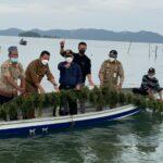Rumput Laut Merupakan Salah Satu Komoditas Unggulan Budidaya Kelautan Dan Perikanan Di Kepri